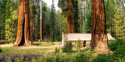 giant-sequoias-yosemite-national-park